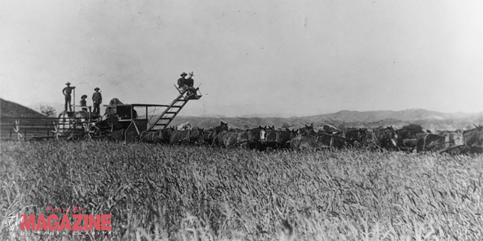 Wheat Harvest, 1897: Pre-Valencia, California