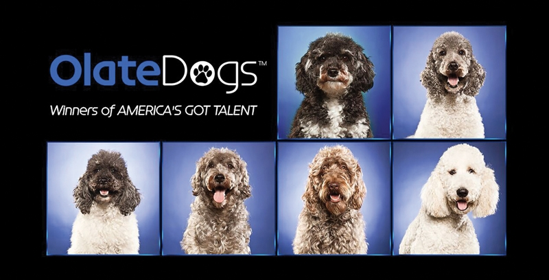 Don't Miss the Olate Dogs at the Santa Clarita Performing Arts Center!