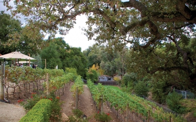 Join Assistance League® for their 11th Annual Sunset in the Vineyard on November 4