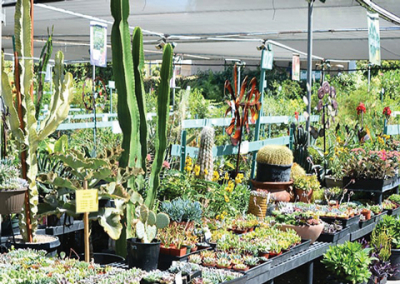 Family Owned Garden Center And Plant