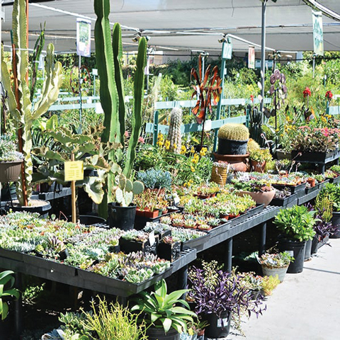 Santa Clarita's favorite family-owned garden center and