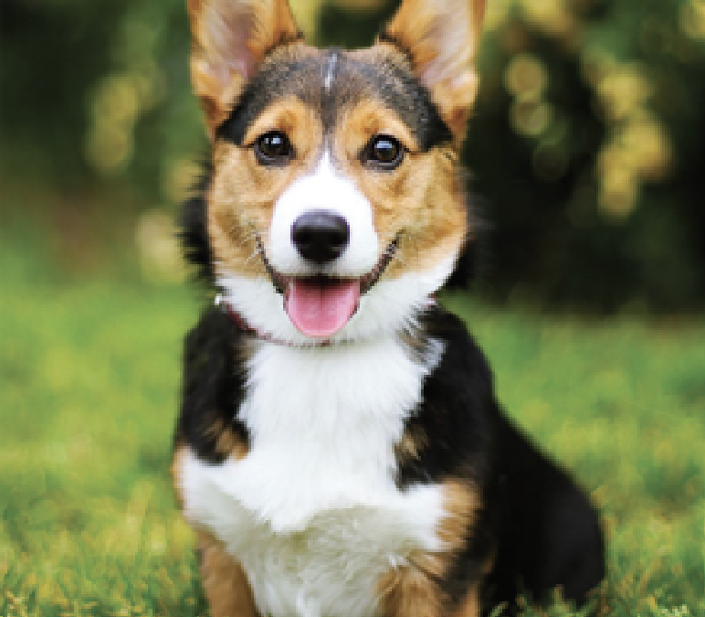 Is Your Pet Picture Perfect?   Submit your best pet photo for a chance to appear in print!