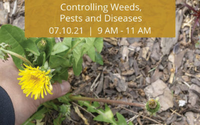 Diagnose and Treat Your Landscape Health Woes SCV Water's Virtual Gardening Classes